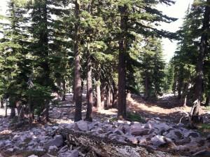 Mt. Shasta Retreat Forest
